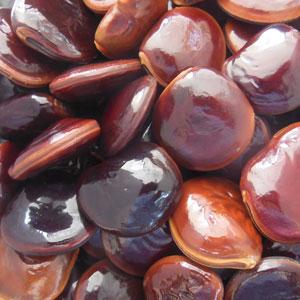 Saddle Beans