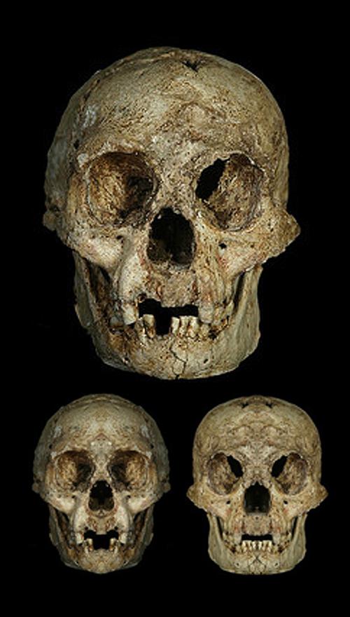 Swanscombe Skull. Inage - Pinterest