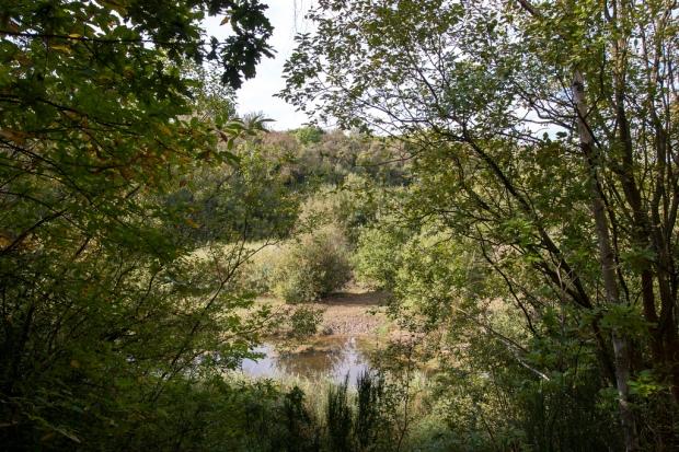 Swanscombe Woodland
